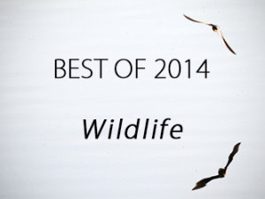 Best of Wildlife Thumbnail